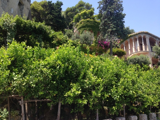 Lemon trees growing at the Hotel.